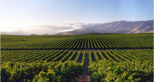 Blog Image for Wein Fokus: DOC von Rioja A Life in Spain