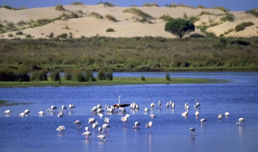 Blog Image for Donana National Park A Life in Spain