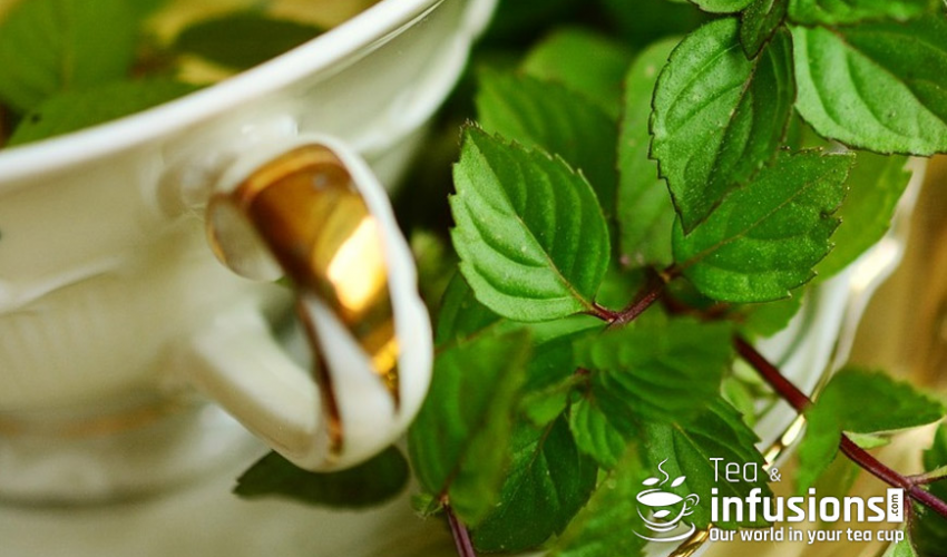 Blog Image for Tea and Infusions - Peppermint tea, a natural digestive Essential. A Life in Spain